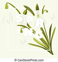 Spring floral background with beautiful snowdrop flowers