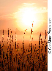 beautiful morning sunrise with wheat grass in the foreground...
