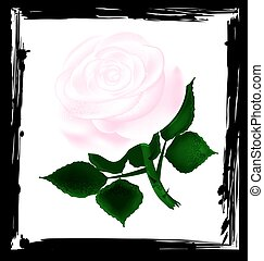 abstract white rose - black background with white abstract...