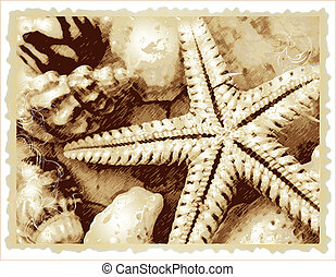 raster cockshell and starfish on the bich