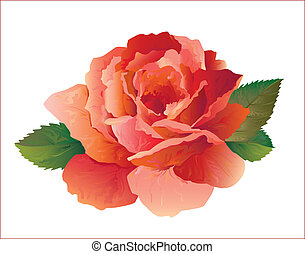red rose - realistic red rose
