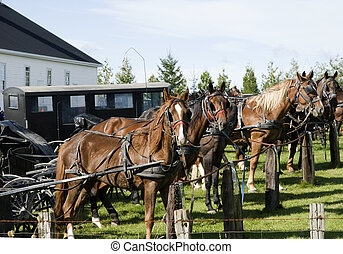 four horses tied to a parking place - four horses tied to a...