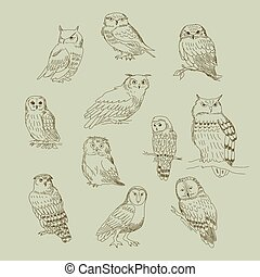 Collection of cute cartoon of different owls