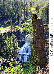 Undine Falls in Yellowstone - Rotting log covered in lichen,...