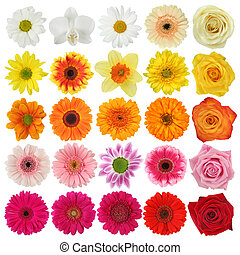 Flower collection isolated on white