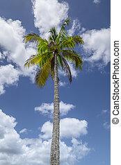 Palmtree - Palm tree on a sunny day