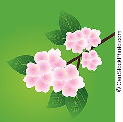 Apple Blossom - vector apple blossom