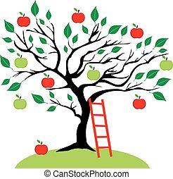 Apple Tree - apple tree with ladder