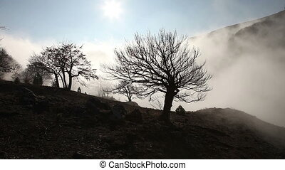 Silhouettes of trees in the fog
