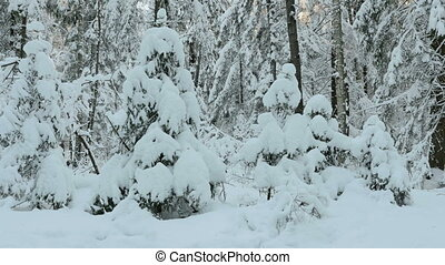 A lot of snow on the trees