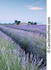 Bauernhof, Lavendel