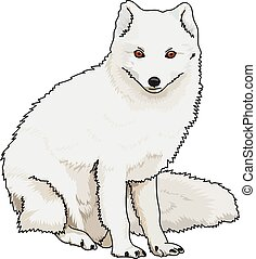 arctic fox - A white fluffy arctic fox on a white...