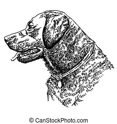 Labrador retriever head vector hand drawing illustration