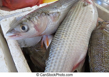 Mullet from adriatic sea in the fish market in Bar-city,...