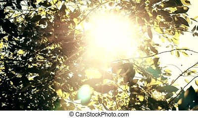 Sun shines through leaves of a tree