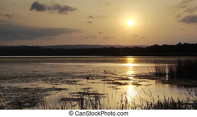 Reeds on lake bed at sunset