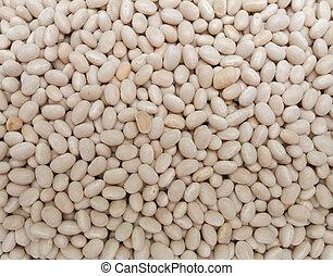 Beans legumes vegetables