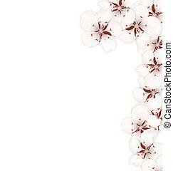 Border Made in Sakura Flowers Blossom Isolated on White