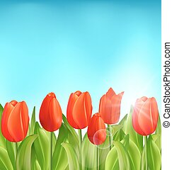 Nature Floral Background with Tulips Flowers