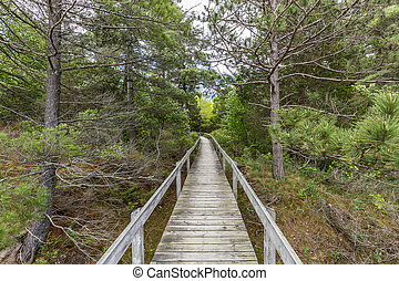 Boardwalk Through Oak Savanna - Pinery Provincial Park,...