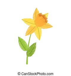 drawing daffodil flower spring floral vector illustration...