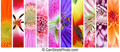 Plant flowers collection set - Colorful spring and summer...