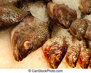 Tilapia fish in fresh eye on the ice tray - Tilapia fish in...