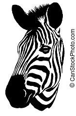 dessiner, linéaire, Illustration, peinture, noir, zebra,...