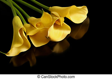 Five Callas on Black