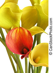 Stand Out - Yellow calla lilies, with a single red-gold...
