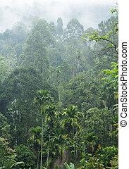 misty jungle