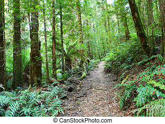 Rainforest Walk - Rainforest walking track, Yarra Ranges,...