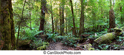 Rainforest Panorama - Panorama of a path through an...