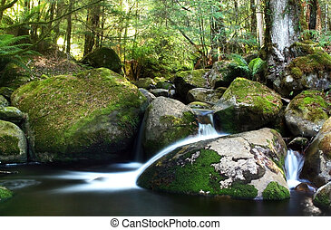 Rainforest River - A river flows gently over moss-covered...
