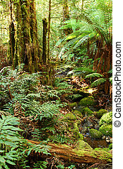 Rainforest Creek - Early morning in a temperate rainforest,...