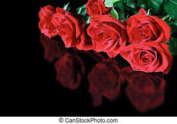 rosas, refletido, vermelho