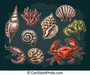 Set sea shell, coral, crab and shrimp. Vector color...