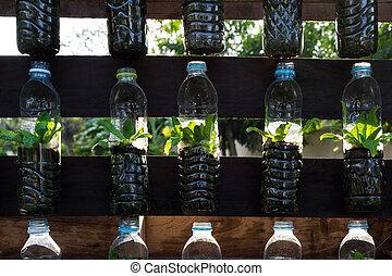 Growing vegetables (parsley) in plastic bottles
