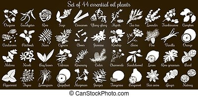 Big vector set of 44 flat style essential oil plants. White...