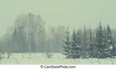 Winter forest, snowfall.
