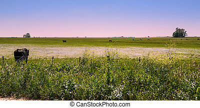View of wet pampas in Areco (Argentina)