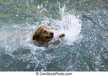 Swimming dog - Brown happy dog swimming in wild river