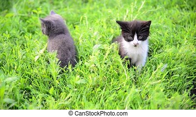 Two kitten in grass in summer