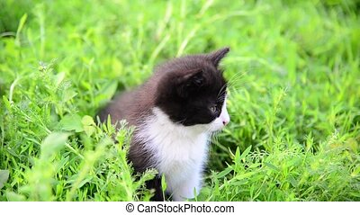 Kitten sitting in tall grass in summer - Kitten sitting in...