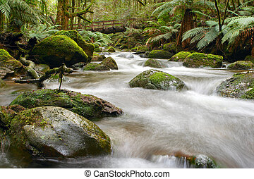 Rainforest River - Moss-covered boulders, tree ferns and...