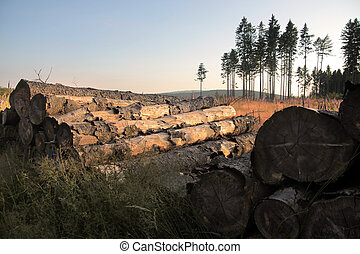Felled trees in a clearing in the Taunus mountains, Germany