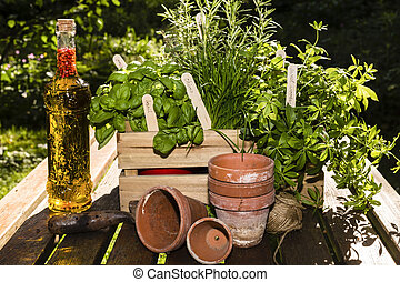 herbs and herbs in oil with flower pots in a garden