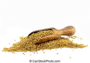 alfalfa, semillas