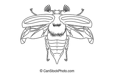 Pictogram, cockchafer, objeto, símbolo, -, poder, maybug,...