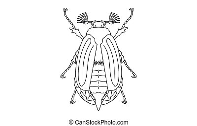 Pictogram - Chafer, Cockchafer, Maybug, May beetle - Object,...